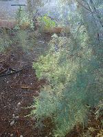 עצים בבית חגלה