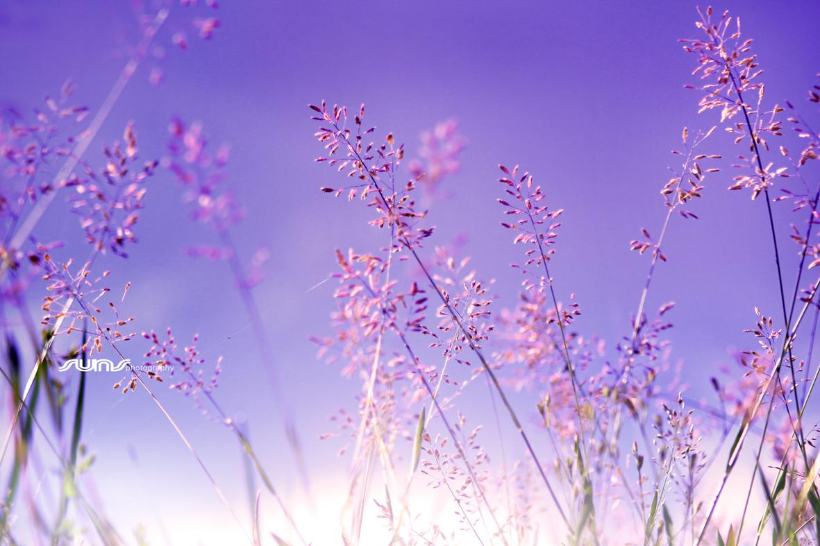 Ảnh nghệ thuật hoa cỏ may