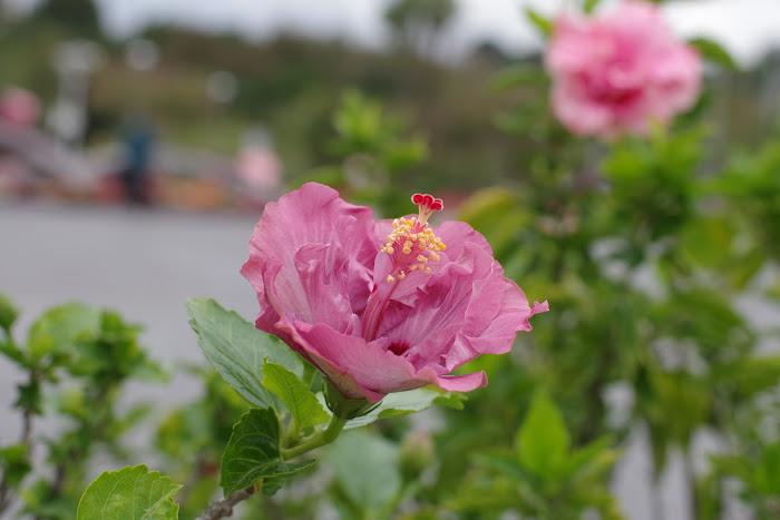 臺北花卉展1