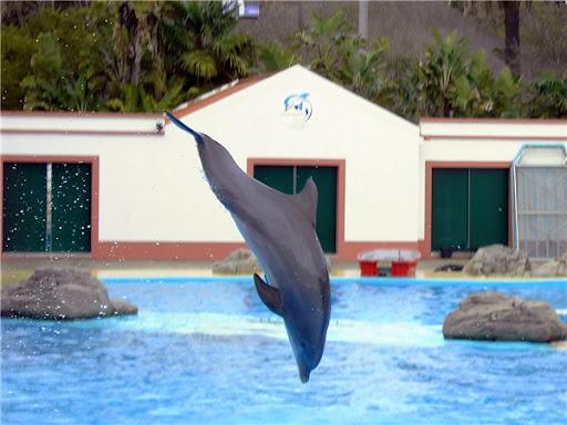 Дельфинарий Лиссабон фото