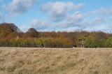 Jægersborg Dyrehave i efterårsfarver