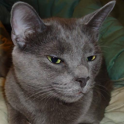 the stern.cat