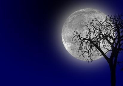 albero e luna