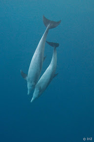 Photo of two dolphins