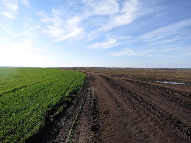 грунтовая дорога в полях
