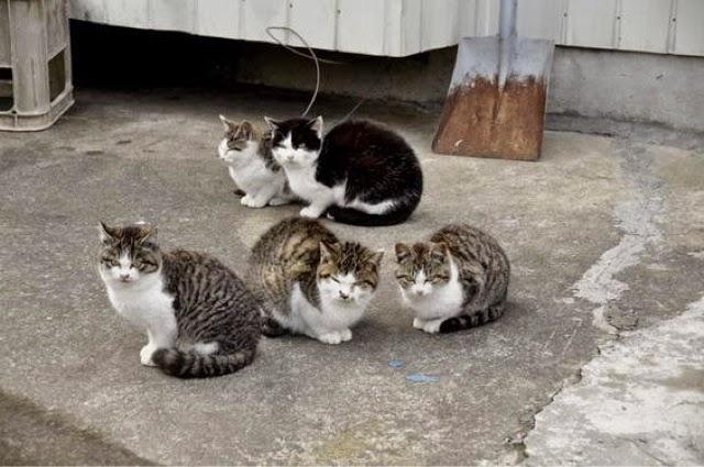 Japanese Culture Tentang Kucing Di Jepang