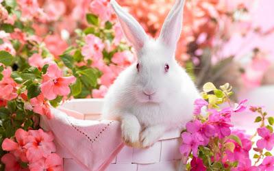 Wit konijn tussen roze bloemen