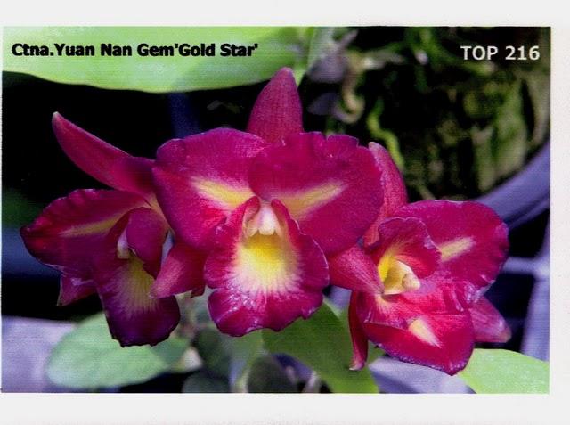 Растения из Тюмени. Краткий обзор - Страница 10 2641d7c2e1bb