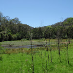 Park Gully Wet land (223478)