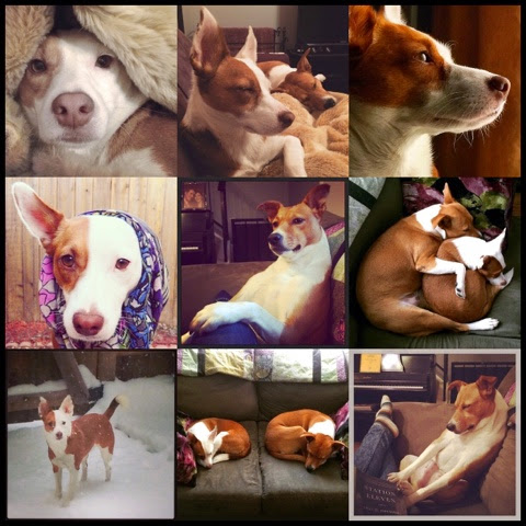 cute dogs instagram jack russell potcake
