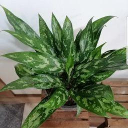 Ali Ahmadzadeh Photo 11
