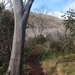 following the metal walkways (83389)