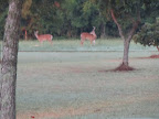 Buck,Big,Deer,Deer Feeder,Hunts,Lease,Hunting,Safety Orange,Deer Rifle
