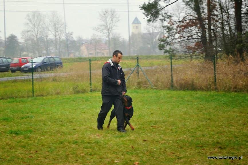 doskonałe chodzenie psa bez smyczy