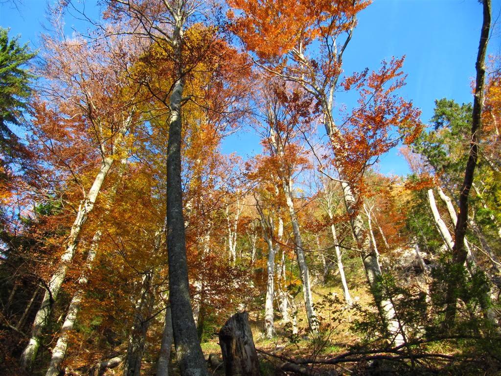 jesen na Begunjščici