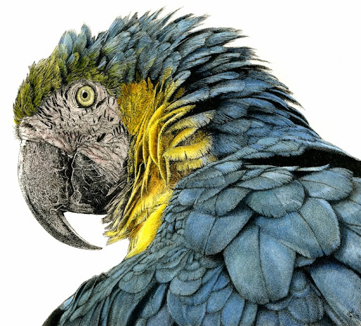 Parrot72dpi-2014-03-31-10-59.jpg
