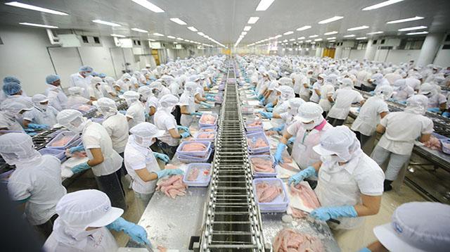 Đơn hàng chế biến thủy sản cần 9 nữ thực tập sinh làm việc tại Hokkaido Nhật Bản tháng 11/2016