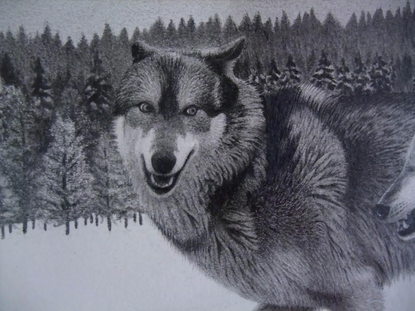 Antoine Roquain Dessin Animalier Wildlife Pencil Art Dessin De Loups