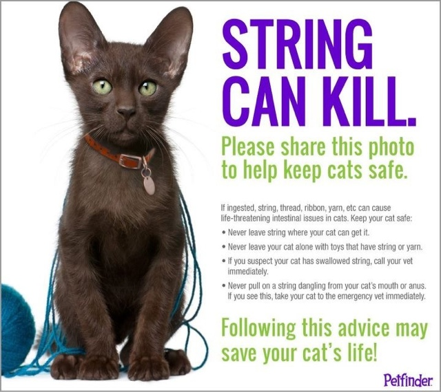 string and thread can kill cats, don't let them play with it