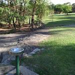 Drinking water at Honeman's Picnic Area (233082)