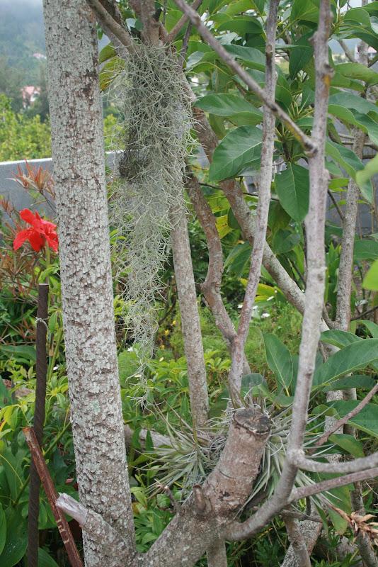 Futur jardin d'orchidées!!! IMG_3559