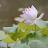 Leoni W avatar image