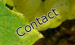 Muscadet Contact