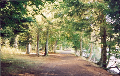 A path through the woods on a beautiful day...