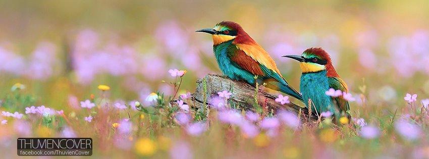 Ảnh bìa những chú chim