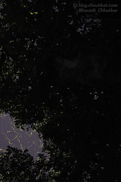 Fireflies / Light bugs everywhere in Bhorgiri, Bhimashankar