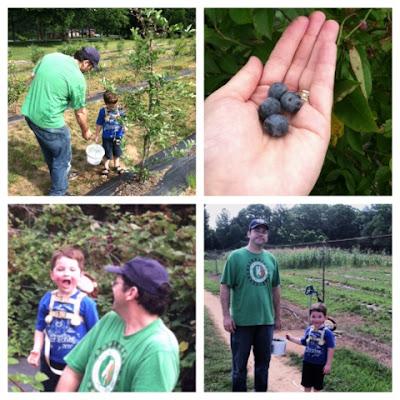 homeschool, nature study, berry picking