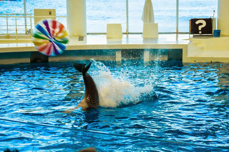アクアワールド大洗水族館 イルカ・アシカオーシャンライブ 写真3
