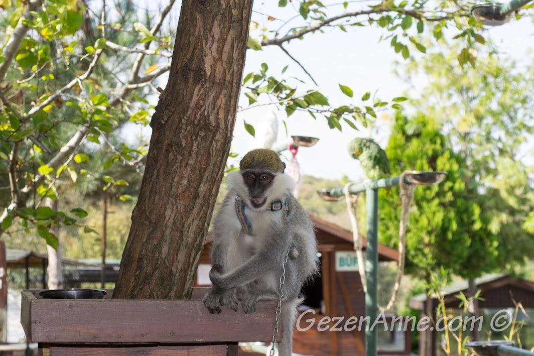 Piknik Park'taki maymun