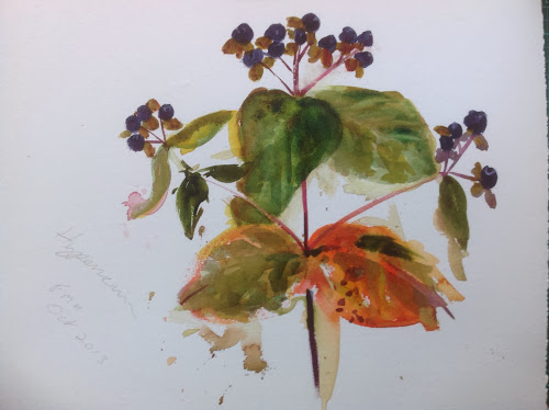 Hypericum watercolour
