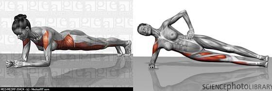 棒式及側棒肌肉作功的圖示
