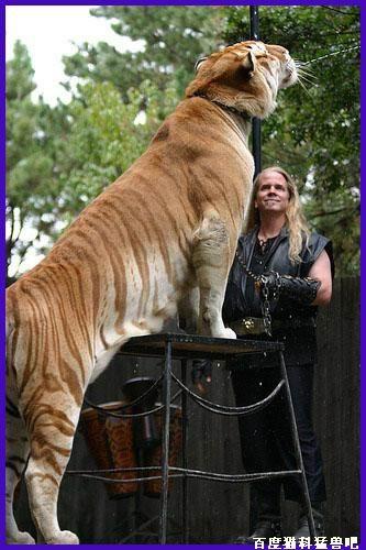 Comparação de  tamanho entre  animais  e   Seres humanos - Página 2 0f2bc5582fda45d0810a1804