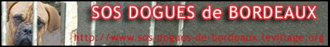 SOS Dogues de Bordeaux