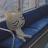 jus tin avatar image