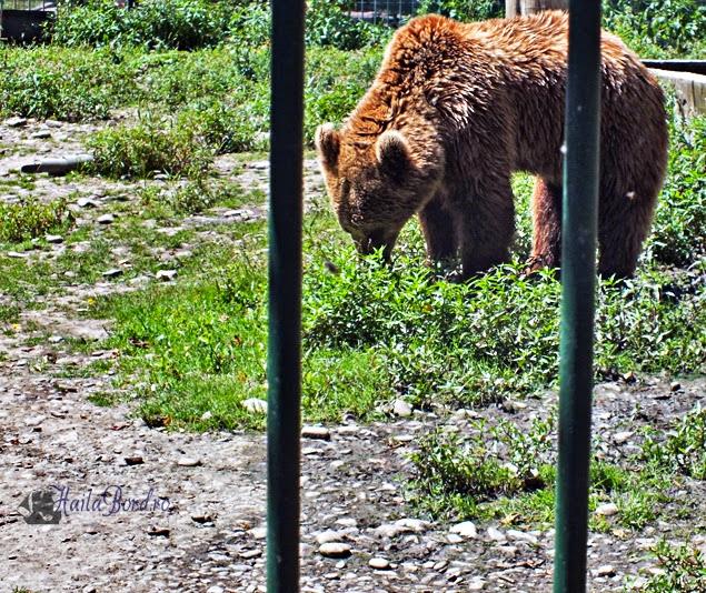 urs zoo radauti