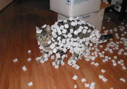 Katinas išdykėlis