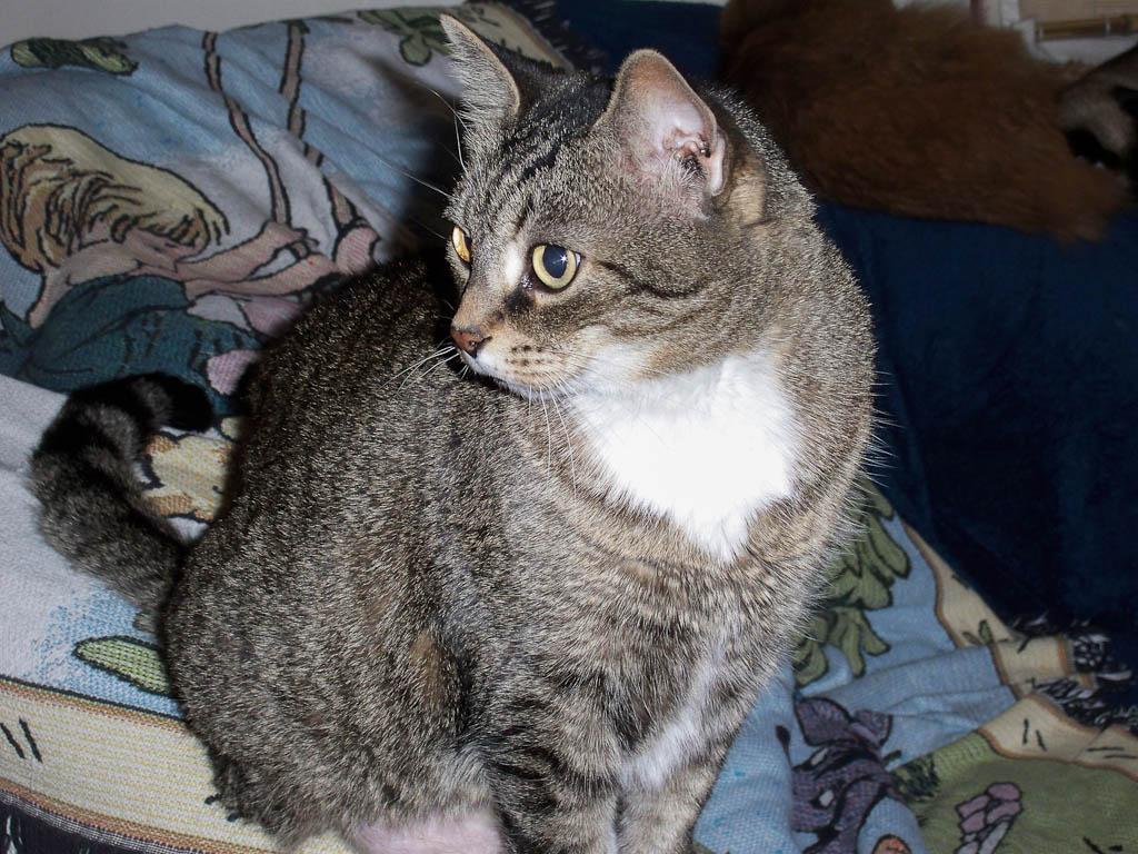 RIP Belle – 2012-07-16