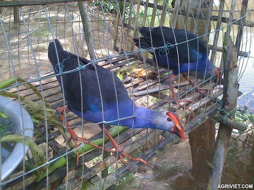 Agriviet.Com-IMG_0767.JPG