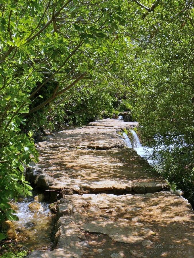 Тропа вдоль ручья Баниас. Экскурсия на Голанские высоты. Гид Светлана Фиалкова.