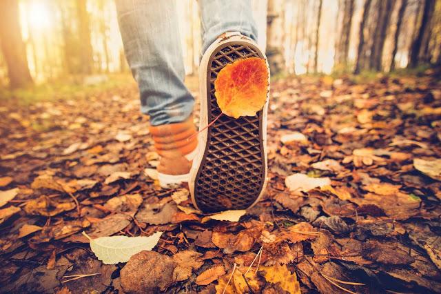 bước đi trong rừng thu