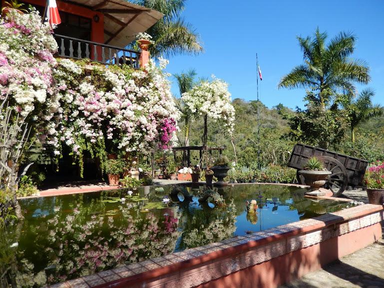 El tuito and the puerto vallarta botanical gardens ms - Puerto vallarta botanical gardens ...