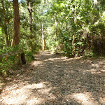 Trail through forest in Blackbutt Reserve (401044)