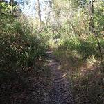 Bush track near Redgum Ave (158128)
