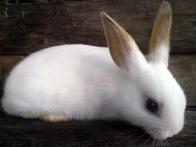 Jean Charlie Rabbit