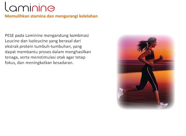 produk laminine Page 47 Nutrisi Herbal Untuk Menormalkan Gula Darah