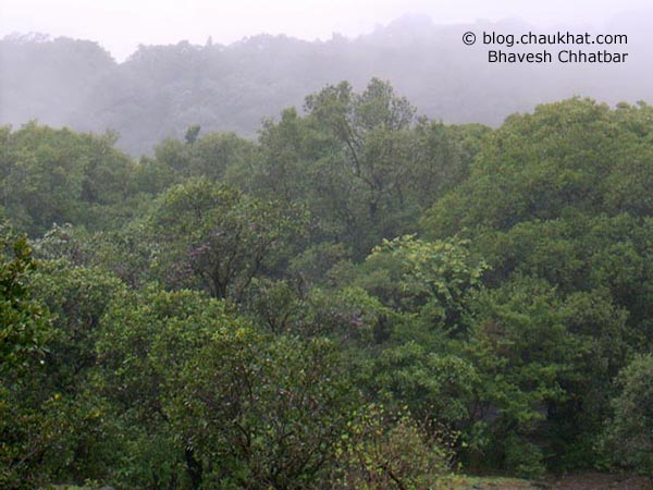 The beautiful and evergreen forest of Bhimashankar. The mist, the greenery, the rawness, all is so amazing!